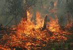 """""""Пирогами, и блинами, и сушёными грибами..."""". В Луганской области тушат пожар!"""